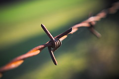 the fence (koaxial) Tags: pb186986a fence koaxial zaun stacheldraht macro closeup rusty rostig manmade border grenze