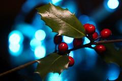holly holiday bokeh (HansHolt) Tags: holly ilexaquifolium ilex hulst twig berries red leaves macro blue bokeh focus dof canon 6d 100mm canoneos6d canonef100mmf28macrousm macromondays holidaybokeh hmm