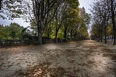 Autumn in Paris - France (R.Smrekar-CH) Tags: autumn paris 000100 d750 smrekar 2018 france