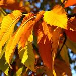 More november gold thumbnail
