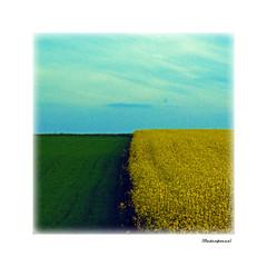 Dreiklang _ Triad     Explored Nov. 17 2018 (Badenfocus_1.100.000+ views_Thanks) Tags: blau grün raps gelb gras himmel drei dreiklang triad badenfocus explored inexplore entdecken