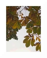 Composición jardines madrileños #4 (juan jose aparicio) Tags: jardín garden hojas leaves minimal verdes color green park trees arboles nature leavescapes