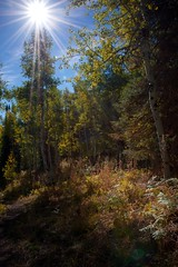 High Mountain Forest Glade (The Good Brat) Tags: colorado us autumn landscape whiterivernationalforest aspen glade backlighting flare sunny starburst fall foliage leaves