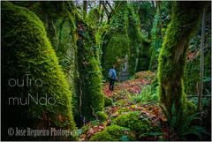 ouTro muNdo (Jose Regueiro) Tags: forest mistery strange galicia grobos fall