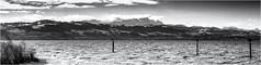 Lakeside Memories II... (Ody on the mount) Tags: anlässe berge bodensee bäume em5ii fototour himmel mzuiko40150 omd olympus panorama pflanzen seeberge urlaub wasser wolken bw clouds monochrome mountains sw sky trees water langenargen badenwürttemberg deutschland de
