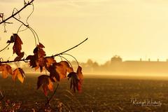Mood (r.wacknitz) Tags: mood yellow leaves fog morninglight monochrom landscape field nikond3400 niedersachsen nikkor
