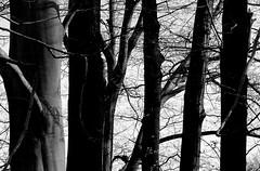 Drzewa. (andrzejskałuba) Tags: poland polska pieszyce dolnyśląsk silesia sudety europe panasonicdmcfz200 lumix roślina rośliny plant plants monochrome bw cień shadow sky natura nature natural natureshot natureworld niebo beautiful las forest flora floral spring widok wiosna view 100v10f 1000v40f 1500v60f