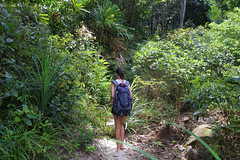 Samantha enters the jungle trail on the southern part of Koh Lipe (B℮n) Tags: kolipe kohlipe เกาะหลีเป๊ะ kohlippy adangrawi archipelago ploysiam national park kohturatao koturatao kohlipeh nationalparkkohtarutao tarutao bounty island thailand andamansea sandy beach snorkling coral reef tropical fish nemo protectedarea palmtree coconuts crystal clear water seawater siam nature reserve province blue cyan thai sunrise bulowbeach deserted girl woman relax paradise swimming solitude jungle green lush forest path trail hiking pollobeach happyplanet 50faves topf50