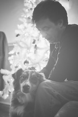 Quiet Moments (flashfix) Tags: december172018 2018inphotos flashfix flashfixphotography ottawa ontario canada nikond7100 40mm portrait sock dog canine animal pet austrailanshepherd triaustrailanshepherd bluemerle tricolour heterochromia man male bestfriends monochrome blackandwhite
