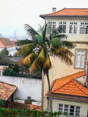 (95Maraa) Tags: aveirocenter aveiro portugal tree árbol palmtree palm palmera verde green tamaraarcehernández arce hernández arcehernández mara958 95maraa mara paisaje