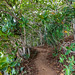 Tropical way Hideaways Beach Princeville Kauai Hawaii