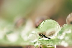 Dewdrop on blade of grass. (d50harry123) Tags: dewdrop bladofgrass macro macrophotography nature naturephotography