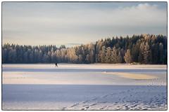 Skiløper på Nordbytjernet (Krogen) Tags: norge norway norwegen akershus romerike ullensaker nordbytjernet vinter winter krogen olympusomd