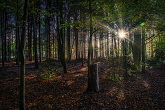 Forest 2 (Geert E) Tags: wood autumn fall sunrays dark glare forest bos herfst bomen trees zon automne forêt soleil arbres obscur
