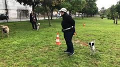 IMG_8535 (Doggy Puppins) Tags: educación canina adiestramiento canino perro dog