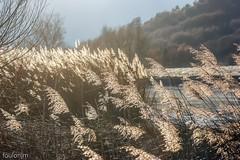 Lac de Mison (foulonjm) Tags: lac mison provence
