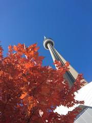 CN Tower in the late Autumnal Sun (Jocksphotobooth) Tags: cntower toronto mapleleafs autumn fall canada jocksphotobooth