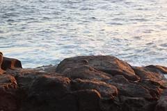 Crab (jtbradford) Tags: kauai hawaii