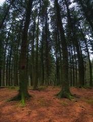06 (Adam Ashton Photography) Tags: forest wood england northwestengland uk orton samsung photooftheday photo365 likeforlike photography