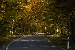 Road through autumn-land (Ernst_P.) Tags: bayern deu deutschland herbst linderhof strase unterammergau samyang walimex 135mm f20 autumn road fall
