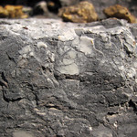 Intraclastic limestone (Mill Knob Member, Slade Formation, Upper Mississippian; Clack Mountain Road Outcrop, south of Morehead, Kentucky, USA) 6 thumbnail