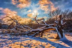 Fallen (nixter) Tags: bellevue clouds cold fallen nebraska snow sun sunrays tree trees weather winter