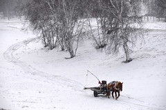 Cart (MelindaChan ^..^) Tags: innermongolia china 内蒙古 cart farmer life people winter snow cold tree snowing chanmelmel mel melinda melindachan horse white 雪 plant nature 冰 bashang 壩上