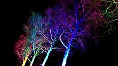 LIGHT-FESTIVAL - Murten 2019 (arteys) Tags: murten morat lichtfestival lightfestival zeiss sony a6000 fribourg friburg schweiz illumination beleuchtung murtenlichtfestival lichtanimationen moratfestivaldeslumières colors lichtfarben lichtkunst lichtspektakel farben lucicolori lichtkünstler leuchtkunst lichter lightshow