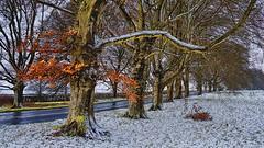 Winter Wonderland (SteveJ442) Tags: snow winter leaves trees dorset wimborneminster blandford kingstonlacy southwestengland uk samsung
