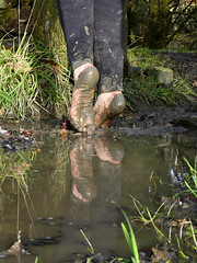 Reflected soles (Barefoot Adventurer) Tags: barefoot barefooting barefooter barefoothiking barefeet baresoles barefooted barfuss muddysoles muddyfeet muddy mud reflectedsoles reflection flexiblefeet freedom earthsoles earthing earthstainedsoles strongfeet soles tiptoe arches ruggedsoles roughsoles