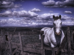 An Horse (Bill Eiffert) Tags: hdr horse sky clouds hills home fence stare blue animal yipee