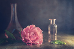 December rose (Ro Cafe) Tags: helios58mmf2 rose sonya7iii stilllife flower pink vases bottles dark darkmood textured romantic naturalezamuerta