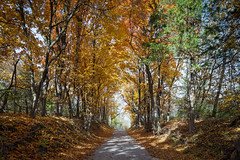 Roby Farm Road (Notley Hawkins) Tags: httpwwwnotleyhawkinscom notleyhawkinsphotography notley notleyhawkins 10thavenue fall leaves color woods columbiamissouri boonecountymissouri road tree forest gravelroad wood rural october 2018 canontse24mmf35lii robyfarmroad landscape outdoors morning