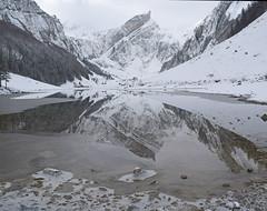 Still (Alpine Light & Structure) Tags: switzerland schweiz suisse snow alps alpen alpes winter alpstein seealpsee