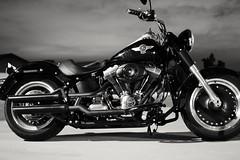 DSC_0765 (carlos_bucardo) Tags: harley davidson fatboylo 103 bobber motorcycle