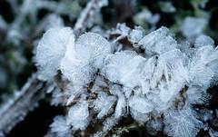 Ice miniatures (JohannesLundberg) Tags: autumn icecrystals frost mattön cold gysinge gävleborgcounty sweden se