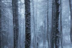 Winter fairytale (AndreaBelussi) Tags: winter inverno snow tree piante neve nevicata guglielmo montagna landscape alpinelandscape monteguglielmo brescia atmosphere fairy best orobie