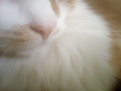Warmth as itself. #cat #cats #flickrcats #warmcats #animals #closeup #details #mobile #photo #mobilephoto #mobilephotography #mobilecamera (jaco.stardust1) Tags: animals warmcats mobilephotography mobilecamera closeup cats mobile flickrcats mobilephoto photo details cat