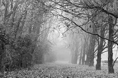 Into The Mist ... (MargoLuc) Tags: fog misty winter days cold mysterious path trees landscape walk park fallen leaves branches monochrome benches bw moody