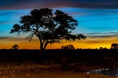 _RJS3103 (rjsnyc2) Tags: 2019 africa d850 namibia night nikon outdoors photography remoteyear richardsilver richardsilverphoto safari sunset travel travelphotographer animal camping nature stars tent wildlife
