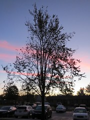 Parking Lot At Sunrise. (dccradio) Tags: lumberton nc northcarolina robesoncounty outdoor outdoors outside nature natural sky color colorful pink contrail bluesky morning morningsy goodmorning thursday thursdaymorning fall autumn november tree trees treebranches brach branches treebranch treelimb treelimbs beauty pretty scenic silhouette canon powershot elph 520hs
