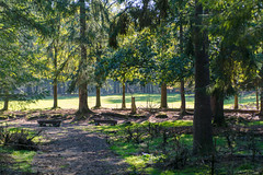 Deer in the distance (michelbosma) Tags: apeldoorn gelderland netherlands nl deer veluwe nature animal