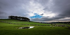 Green and pleasant land (Phil-Gregory) Tags: nikon d7200 tokina1120mmatx 1116mmf8 1120mmproatx11 1120mmproatx countrylife countryside country green trees sheep dovedale hartington milldale staffordshire peakdistrict clouds cloudscape wideangle ultrawide reflection
