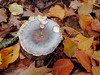 "OLYMPUS DIGITAL CAMERA • <a style=""font-size:0.8em;"" href=""http://www.flickr.com/photos/118469228@N03/30876576057/"" target=""_blank"">View on Flickr</a>"