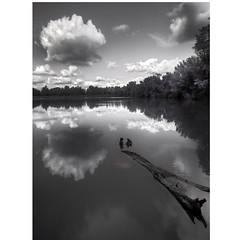 Colorless mirror (Robyn Hooz) Tags: rubano parco laghetti specchio mirror acqua water sky cielo ramo branch nuvola cloud padova