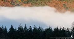 Mer de nuages dans la vallée de Kaysersberg depuis Limbach, automne, Lapoutroie, Alsace, France (regard graphiste) Tags: 2018 brouillard nature automne sapins massifvosgiens merdebrouillard parcdesballonsdesvosges montagne hautrhin arbre foret conifères chataignier saison cimes inventaireforestier arbres parcnaturelrégionaldesballonsdesvosges france parcnatureldesvosgesdunord conifère forêt vosges sapindesvosges alsace sapin végétation merveilledelanature merdenuages grandest forêtdesapin régiongrandest natural tree