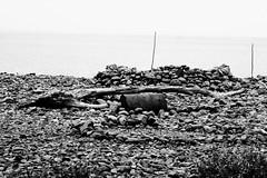 Porlock weir (catch_22_08) Tags: somerset pebbles driftwood beach porlockweir