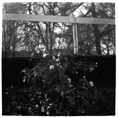 Roses (Mattias Lindgren) Tags: autumn sverige medium format 6x6 sweden pentacon six tl film iso 100 mf f28 120film scan fomapan 80mm bw höst foma analog mc biometar 2880 carl zeiss jena mcbiometar2880carlzeissjena foma100 fomapan100 iso100 mediumformat pentaconsixtl 2018recap