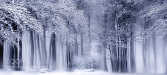 ~ Frosty trees ~ (hoangcuongnokia8800) Tags: 500px fine art artistic digital artworks trees tree forest woodland winter wonderland dream winterscape dreams light misty mood mist black white composition composing photoshop snow mysterious world mystic