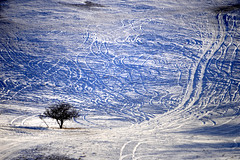 Tree (MelindaChan ^..^) Tags: innermongolia china 内蒙古 snow white 雪 tree plant nature chanmelmel mel melinda melindachan 冰 bashang 壩上